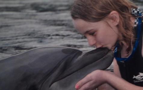 Sea World bids adieu to killer whales