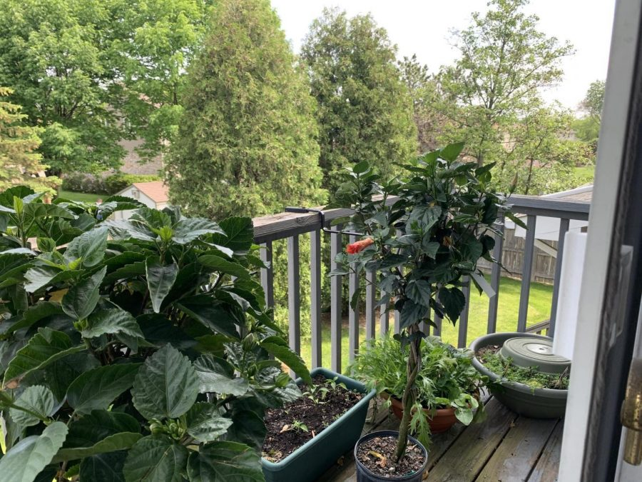 With the warmer weather, summer becomes a chance for families to grow their own gardens- filling yards with vibrant green trees, tasty vegetables, and colorful flowers.